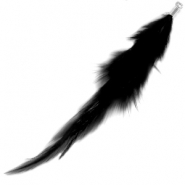 Feathers Black